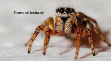 Nastriekajte tento olej a už nikdy viac doma neuvidíte pavúky