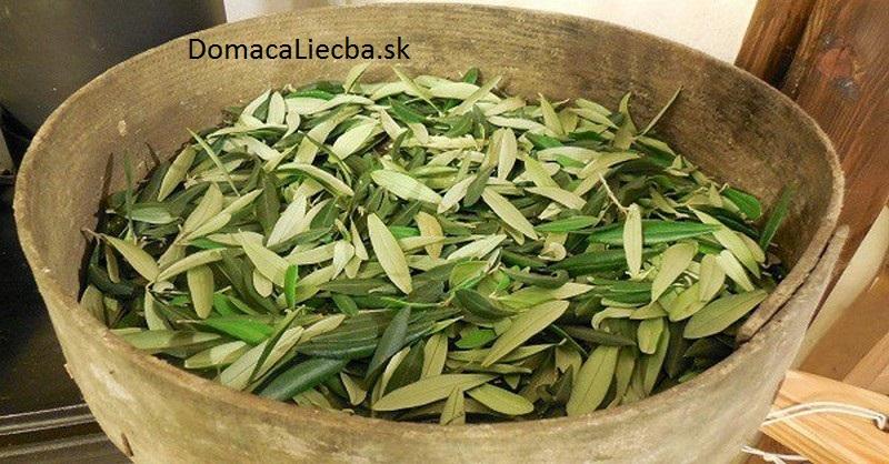 olivové listy ako liek