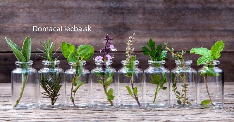 bylinky-pestovanie-vo-vode