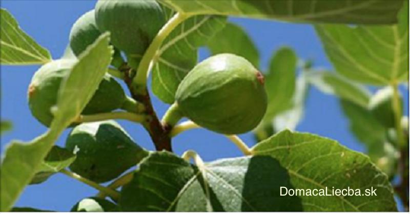 Nestrácajte čas a peniaze: Zbavte sa cukrovky, cholesterolu či vredov s listami tohto stromu