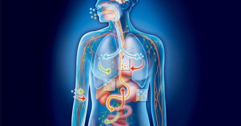 Ako detoxikovať celé vaše telo a už nikdy nebyť chorý ani unavený