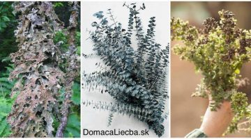 3 najlepšie bylinky na prečistenie pľúc od prachu, plesní, baktérií a toxínov