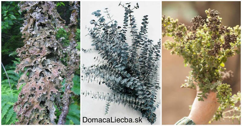3 bylinky na očistu pľúc od prachu, plesní, baktérii a toxínov