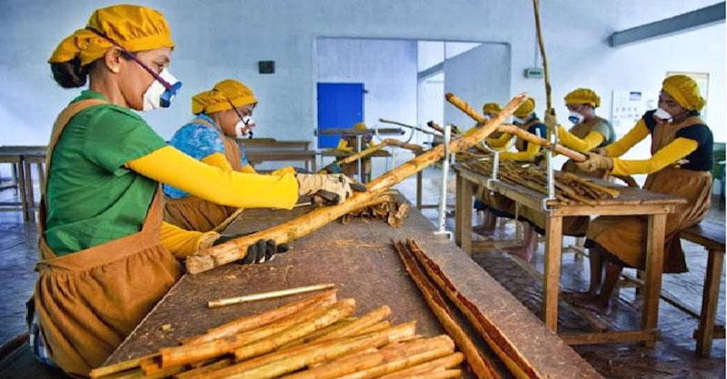Jete škoricu importovanú z Číny? Takto rozoznáte, či je pravá alebo falošná