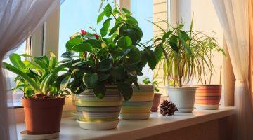 Prítomnosť týchto 4 rastlín vo vašom domove vám prinesie šťastie