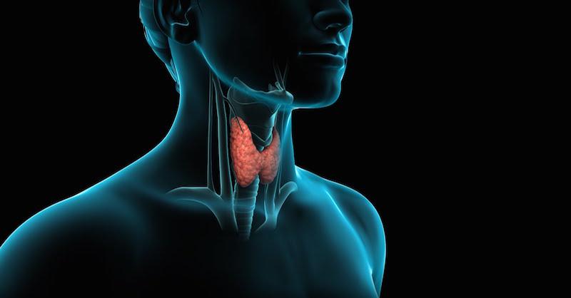 Všetko, čo potrebujete vedieť o každej chorobe štítnej žľazy: Príznaky, príčiny a liečba