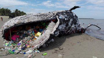 """Táto """"mŕtva veľryba"""" je strašidelným pripomenutím masívneho problému znečistenia plastami"""