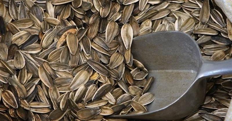 Semienka, čo liečia srdce, rakovinu, úzkosť, zrak aveľa iných chorôb